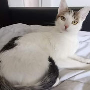 Katze Mia - Besitzertier in Deutschland