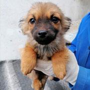1 Tier in Rumänien durch Namenspatenschaft Peppi, Pro Dog Romania eV