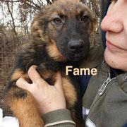 1 Tier in Rumänien durch Namenspatenschaft Fame, Pro Dog Romania eV