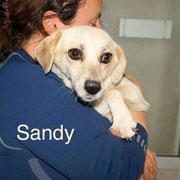 1 Tier in Rumänien durch Namenspatenschaft Sandy, Pro Dog Romania eV
