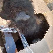 4 Tiere Schlupfwinkel Moldawien über Stimme der Tiere eV