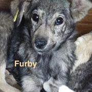 1 Tier in Rumänien durch Namenspatenschaft Furby, Pro Dog Romania eV