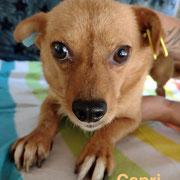 1 Tier in Rumänien durch Namenspatenschaft Capri Pro Dog Romania eV