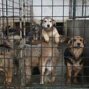 2 Hunde im Tierheim BUCOV in Ploiesti, Rumänien, Pro Dog Romania eV