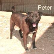 1 Tier in Rumänien durch Namenspatenschaft Peter Pro Dog Romania eV