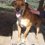 Rüde Fadi aus Polen, Not-Hund, Beselich