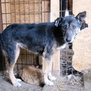 1 Tier in Rumänien durch Namenspatenschaft Hanka Pro Dog Romania eV
