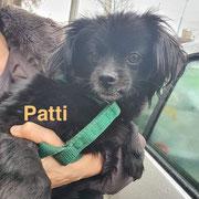 1 Tier in Rumänien durch Namenspatenschaft Patti, Pro Dog Romania eV