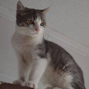 Katze Zoey, Katzenhilfe Yuma & Co, Nagold