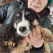 1 Tier in Rumänien durch Namenspatenschaft Tiffy, Pro Dog Romania eV