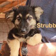 1 Tier in Rumänien durch Namenspatenschaft Strubbel, Pro Dog Romania eV