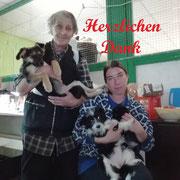 2 Kater, 2 Katzen Svetlanas Tierheim/Abakan über Tierhilfe BlueMoon eV