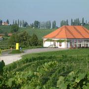 Vinotek Malek