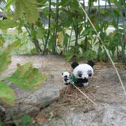 kleiner Panda nach Anni310 (Perlentiere.com/forum), großer Panda nach Cecilia (Perlentiere.com/forum)