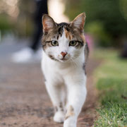 GuestHouse Cat 'Katinka'
