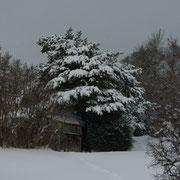 A charupia la cabane sous le grand pin