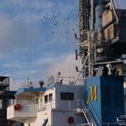 Getreidehafen - Januar 2011 - MARIT Länge: 122m; Breite: 16m