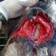 Herida frontal