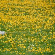 """Ein Frühling irgendwann in der Nähe von unserem """"Bühl"""""""