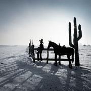 Flower-Horse-Ranch