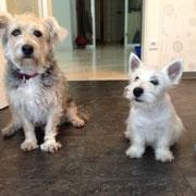 Max und neuer Freund