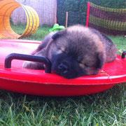 Brisbee... Schlaf der Gerechten...