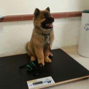 Mein 1. Tierarztbesuch :)