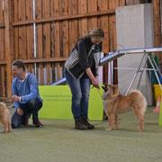 Hiron + Camina beim Ausstellungstraining :)