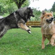 """Der """"böse Wolf"""" ;)"""