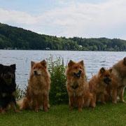 Amicelli, Amadea, Bijou, Hiron und sein Papa Azou :)