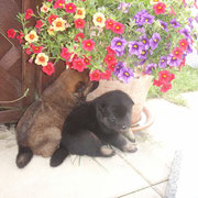 Blumen-Wuggls ;)