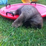 Brisbee ist etwas müde... ;)