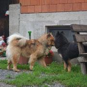 Brisbee und Amicelli