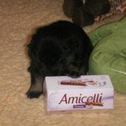 Amicella