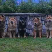 Chinook, Amadea, Amicelli, Cassady + Cjumani