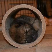 Cassady findet diesen Schlafplatz super! ;)