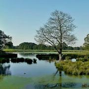 Naturschutgebiet DeWitt See