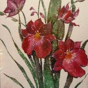 Orchideen, Aquarell auf Papier, 40x50
