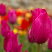 Никитский Ботанический сад. Ялта. Крым