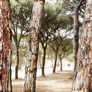 Najara, Spanien, 2014, Lambdaprint/Diasec hinter Acryl, Ed. 5 25 x 200 cm