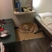 hundefreundliche Kabine TT-Line