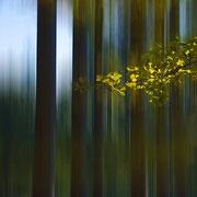 Bäume in Bewegung 2