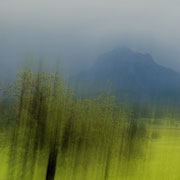 Bäume in Bewegung 4