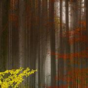 Bäume in Bewegung 3