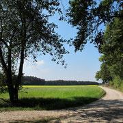 Nach ca. 3 km: Noch immer geht es leicht bergauf  (Links die Abzweigung der früheren 8,7-km-Strecke.).