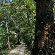 Auf  den letzten Kilometern geht es am Nadlersbach entlang.