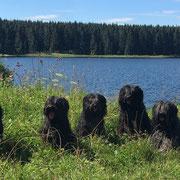 mit Oma, Mama, Papa und Esteban im Harz