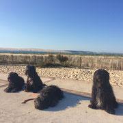 mit den Jungs am Cap Ferret mit der Dune du Pyla im Hintergrund