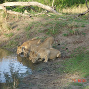 Südafrika 2010