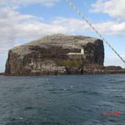 Der Bass-Rock, Heimat der Bass-Tölpel